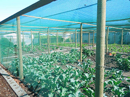Facility-Vegetable-Garden-Programme-category
